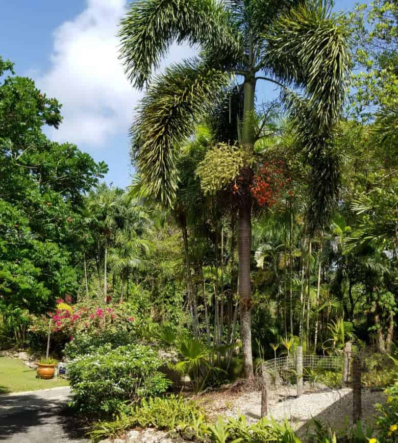 Orchid World and Tropical Flower Garden in Barbados – 10 Must-See Places in the Southern Caribbean